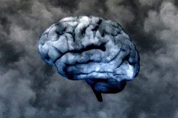 gray-brain